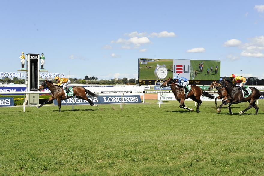 Firm Win For Niccolance