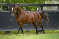 ​Group 1 Season With Snitzel