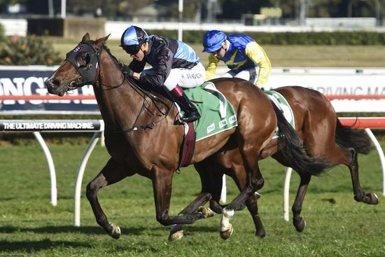 Tycoon Tara Lauded NSW Champion Sprinter