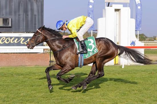 ​Half-Brother to Pride of Dubai Bolts In
