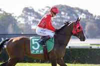 Triple Crown's Magic Millions Raceday Preview