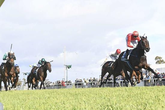 ​MOSS SUPERIOR IN SCONE GUINEAS