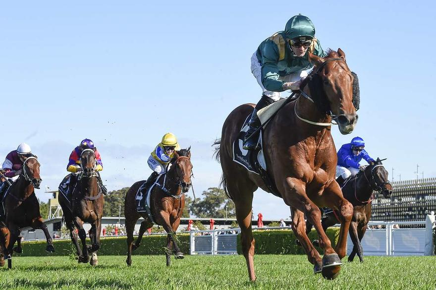 ​HELAKU STEPS UP TO RANDWICK