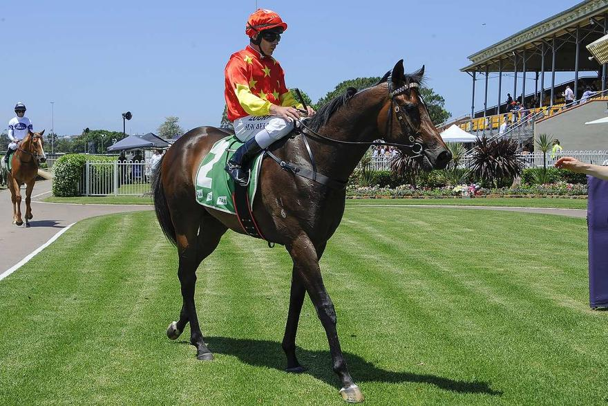 COSMIC FORCE AND NATALIA WIN FIRST TWO AT NEWCASTLE