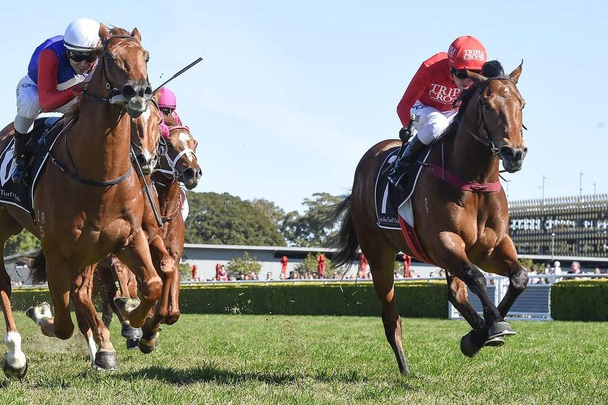 ​MILITARY ZONES IN ON GOSFORD GUINEAS