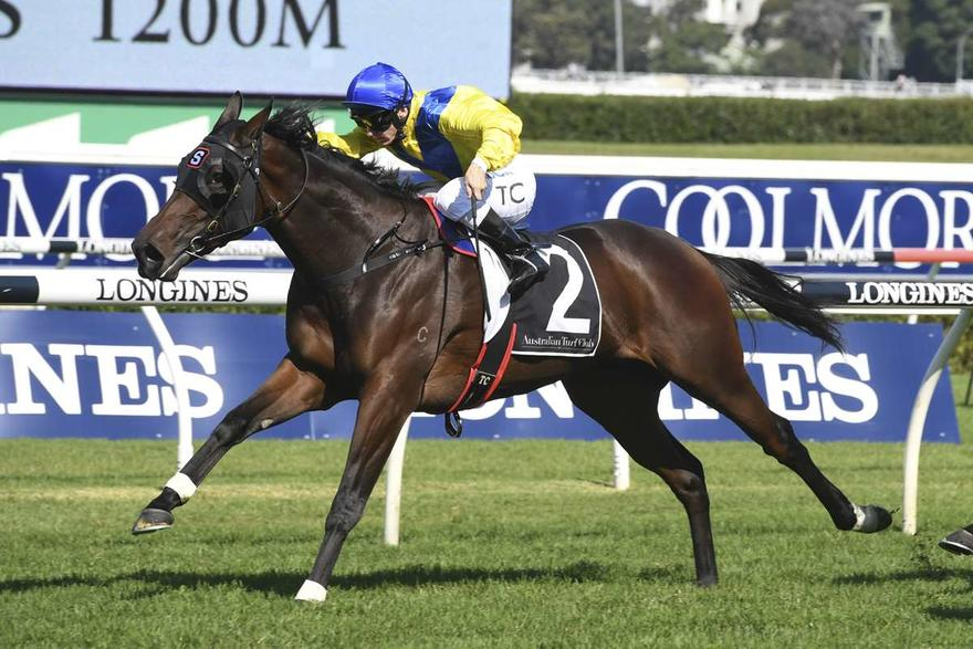 SPRING IS IN THE AIR & SO ARE OUR RISING 3YO CONTENDERS...