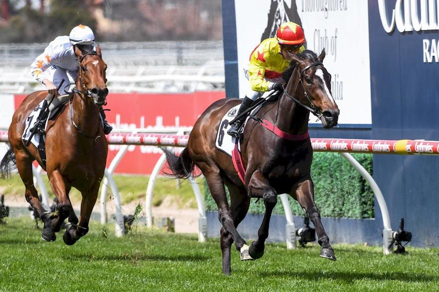 CALIFORNIA ZIMBOL IMPRESSES AT CAULFIELD!