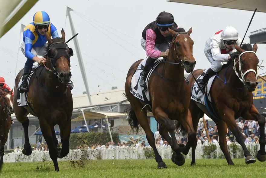 Sancy scores on debut enroute to the Magic Millions