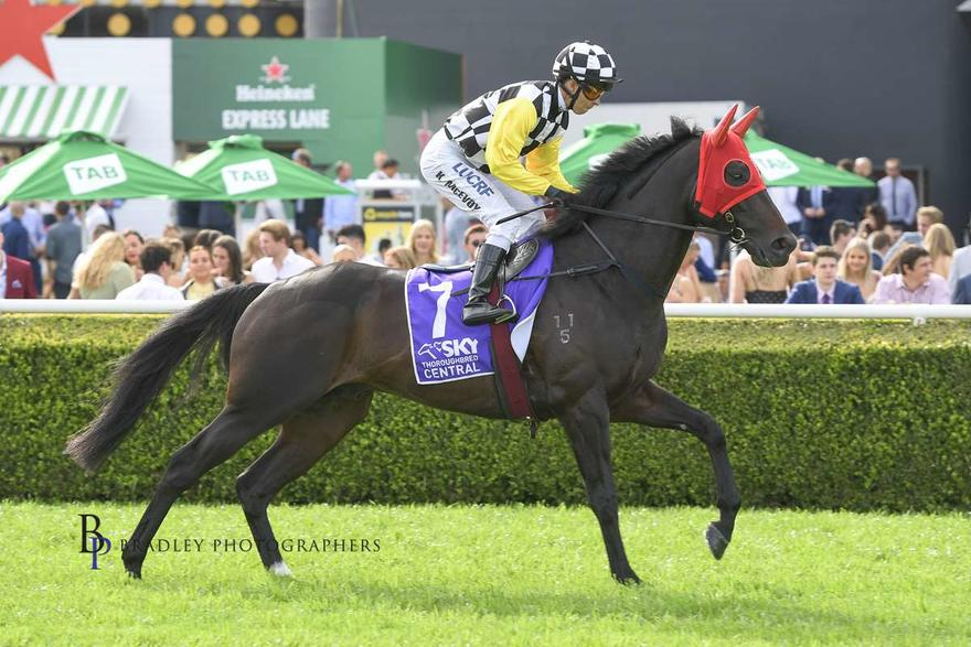 Sydney Cup test for Carif in G2 Chairman's Quality
