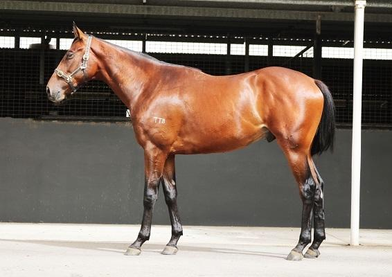 RACING CLUB NO.2 HAS A SMART COLT SAYS MULTIPLE GROUP ONE BREAKER.