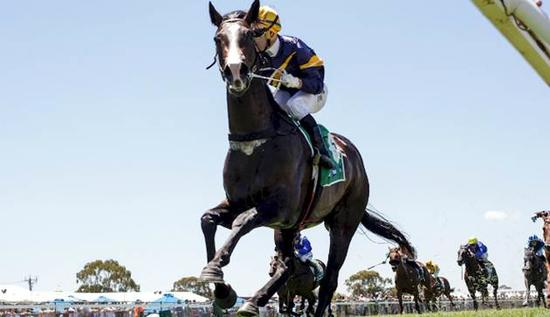 Price looks for Guineas Grunt