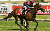 Glenrowan Prince claims back-to-back horse of the year