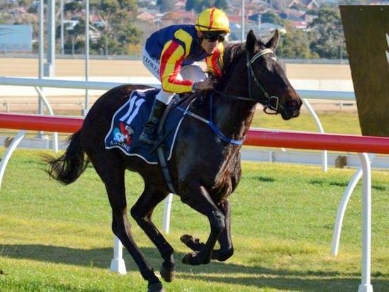 Lady Pluck off to Melbourne