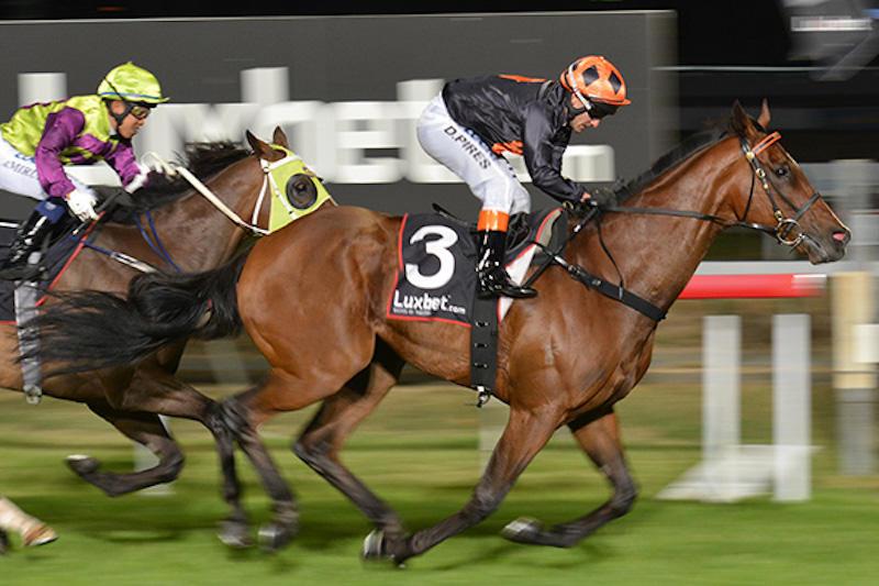 Lord Da Vinci horse.jpg