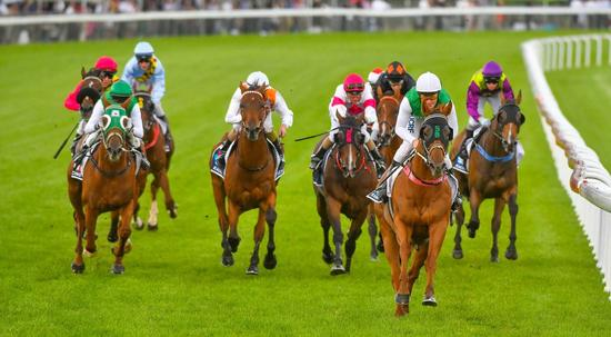 Hellova Street could join select group to have won dual Tasmanian horse of the year awards