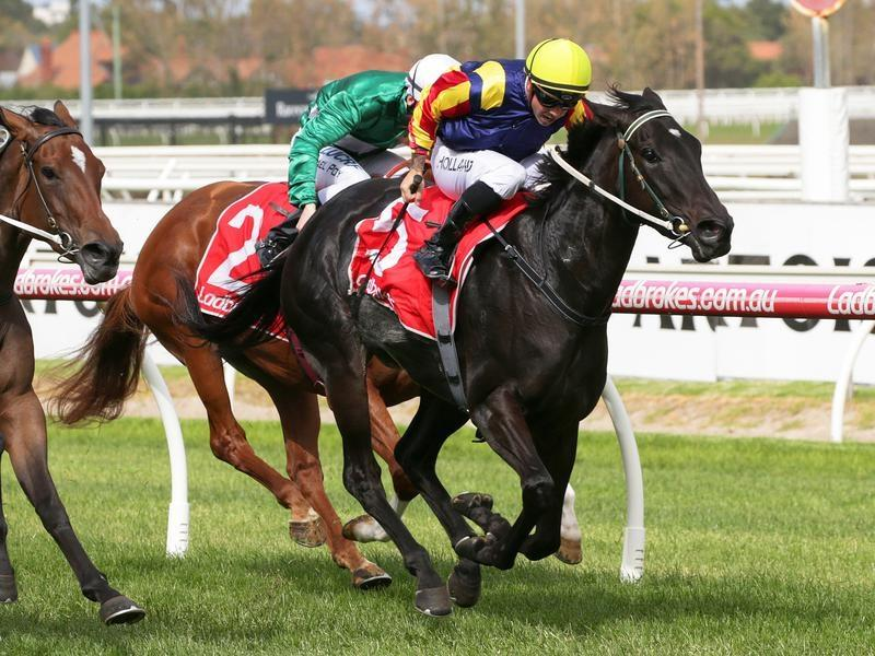 TASSIE FILLY HOLDS ON IN CAULFIELD VICTORY