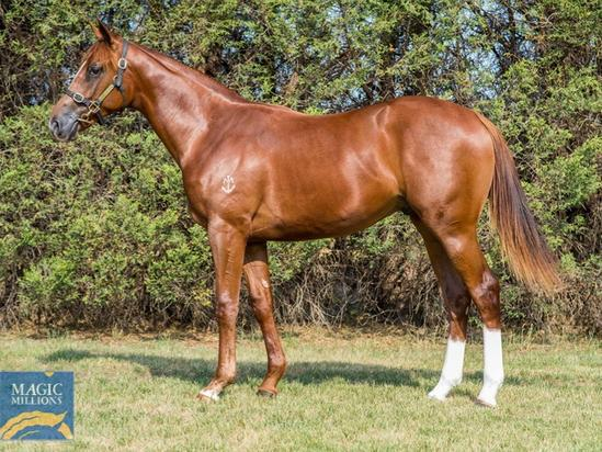 Zoustar X Without Saying Colt