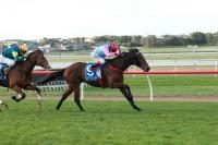 Josh Julius ready to Dazzle at Flemington
