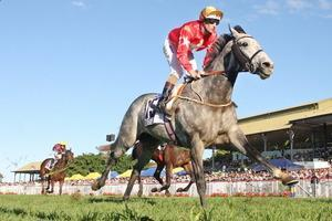 MATEO A WINNER AT MORNINGTON