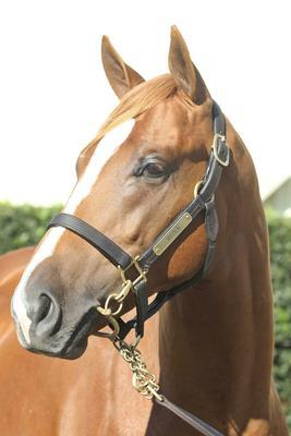 SHARES AVAILABLE IN 2011 YEARLING PURCHASES