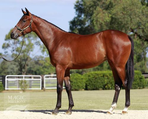 LOT 527 CHIC CHOICE / STARCRAFT FILLY