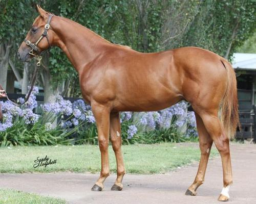 TONY NOONAN RACING NEWS FROM MELBOURNE PREMIER YEARLING SALE