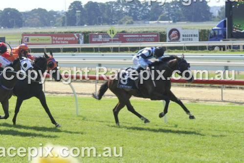 PARAMOUR WINS AT HIS HOME TRACK