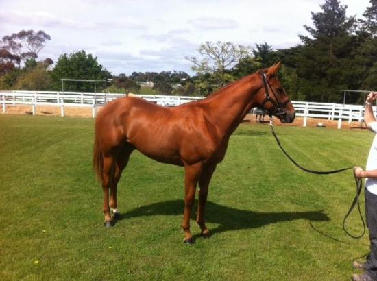 FIRST WINNER FOR NORTHERN METEOR PROGENY