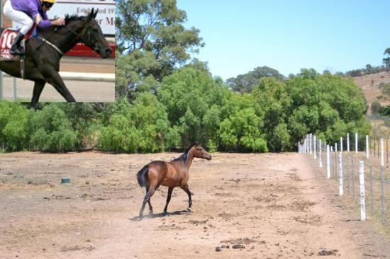 NEW ARRIVAL: STRATEGIC - LADY LISBON