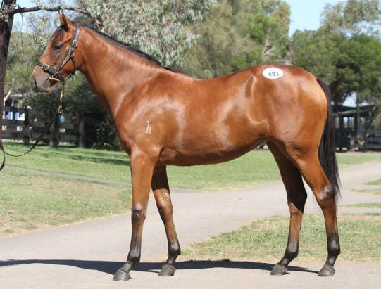 FILLY AVAILABLE FOR PURCHASE BY ONE OF THE HOTTEST SIRES IN AUSTRALIA