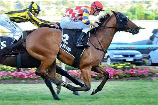 CALIBRATE OVERCOMES ADVERSITY TO WIN AT MOONEE VALLEY