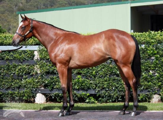 Shares available in stunning So You Think filly related to Manighar