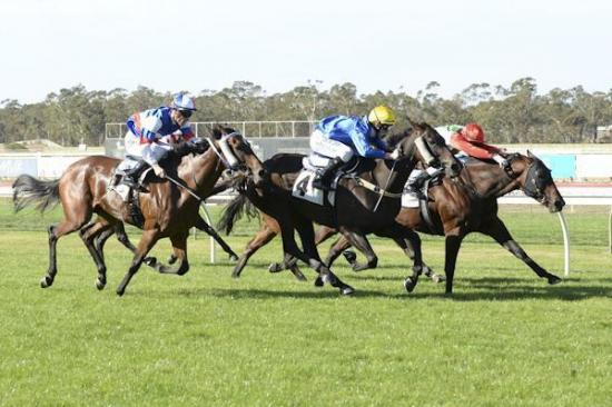 Swiftly Red simply too swift at Bendigo