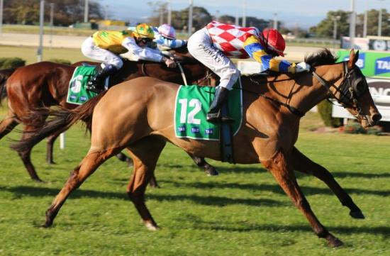 Paradanza unleashes fury at Cranbourne for dominant win