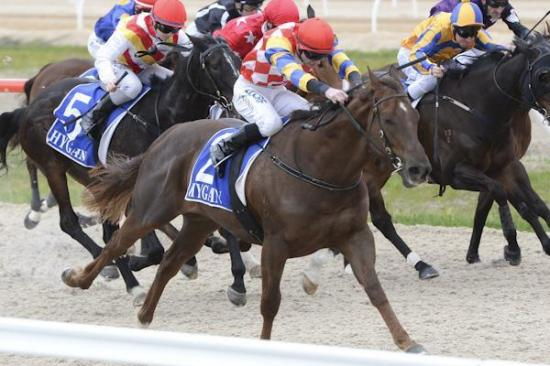 Temple Tilt back to winners circle after colic attack