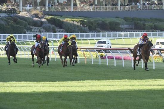 Paradanza romps away at The Valley to claim first metro win