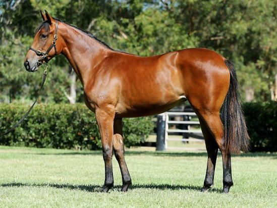 Affordable Shares Available In Classic-Type Animal Kingdom Filly From The Gunnamatta Family