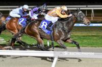 It's Perfect Pakenham again for Pirellina