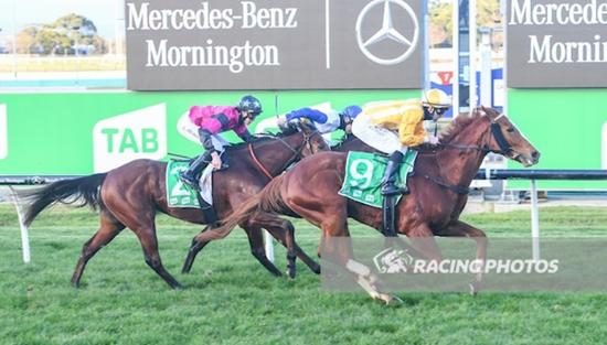 Noonan opens new season account as Toff Choice salutes at Cranbourne