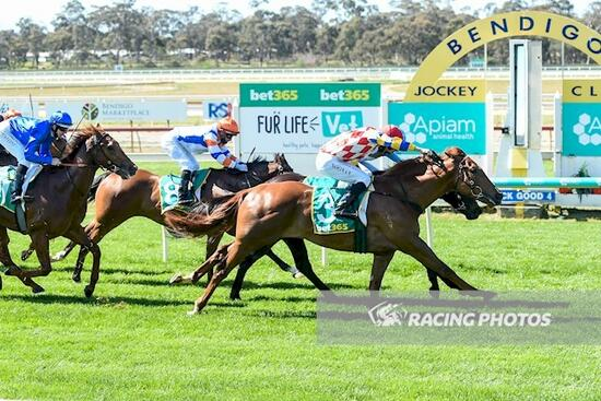 Smart one unveiled at Bendigo as Hickok guns em' down with booming win