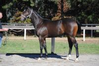 Simply Stunning Statue Of Liberty Colt