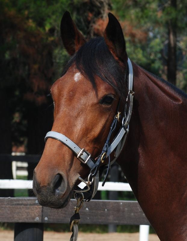 No better time to secure your share in our Testa Rossa Filly