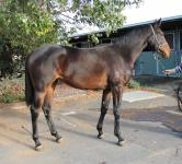 ​ Race a Denman filly with EZR