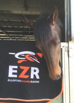 EZR launch new website