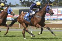 Beltum belts them at Geelong