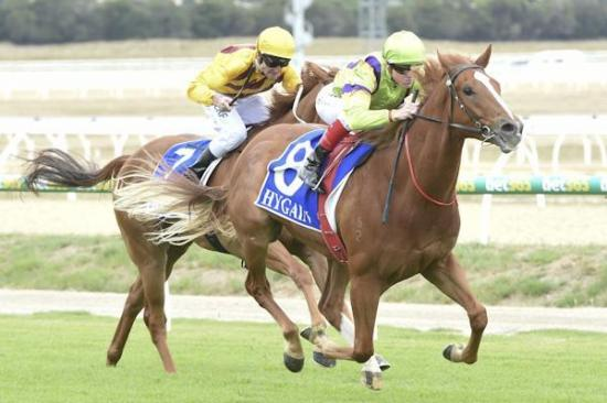 Favourite's boy Springs to victory at Pakenham