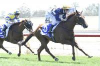 Chilean Wonder emerges as staying prospect at Echuca