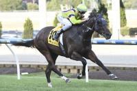 Runaway Moonee Valley win for Miss Cooper