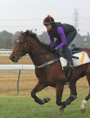 Trackwork with Katelyn Mallyon
