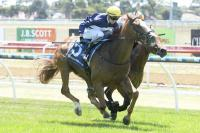 Sir Sagamore gets the money at Geelong